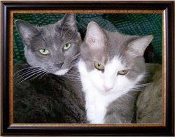Mittens (left) Maybelline (right)